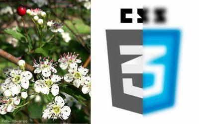 Filtros con CSS3