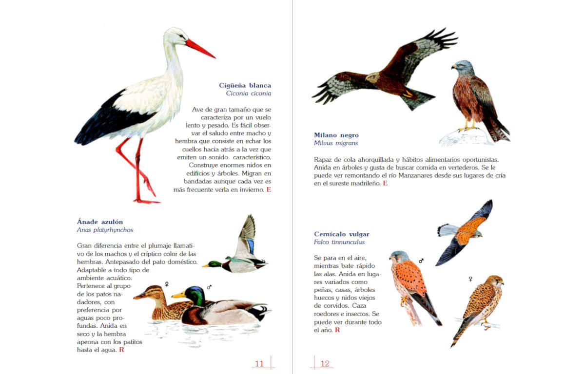 mal ejemplo catalogo de aves