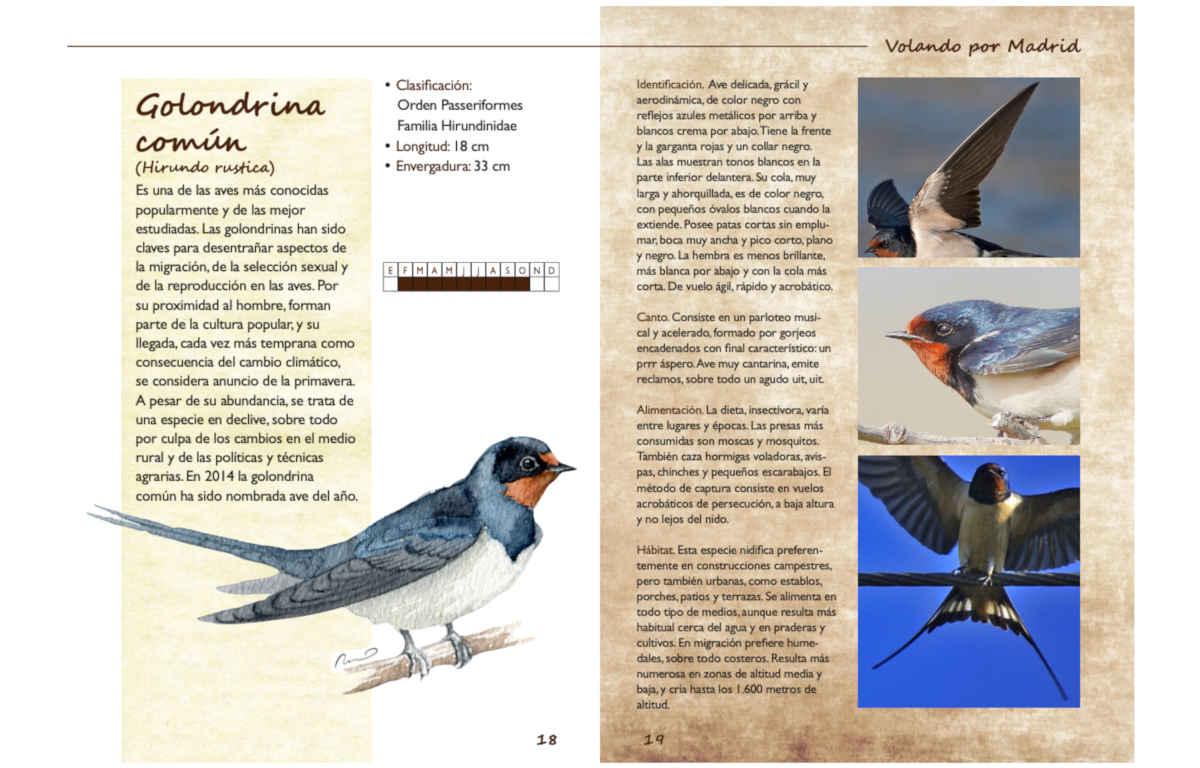 catalogo aves 02